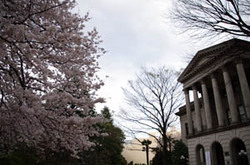 Sakura_agu